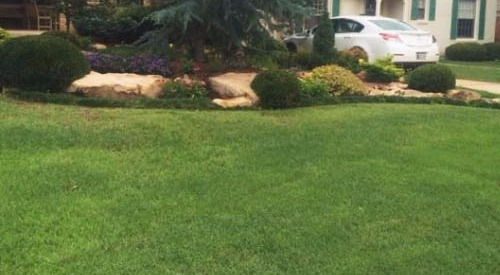 Residential Weed Control